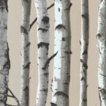 'Birch Tree' Textured Wall Covering